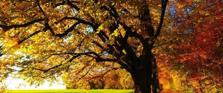 Voilà l'automne !
